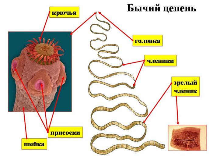 как вылечиться от паразитов
