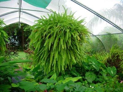 Фото Названия комнатных растений
