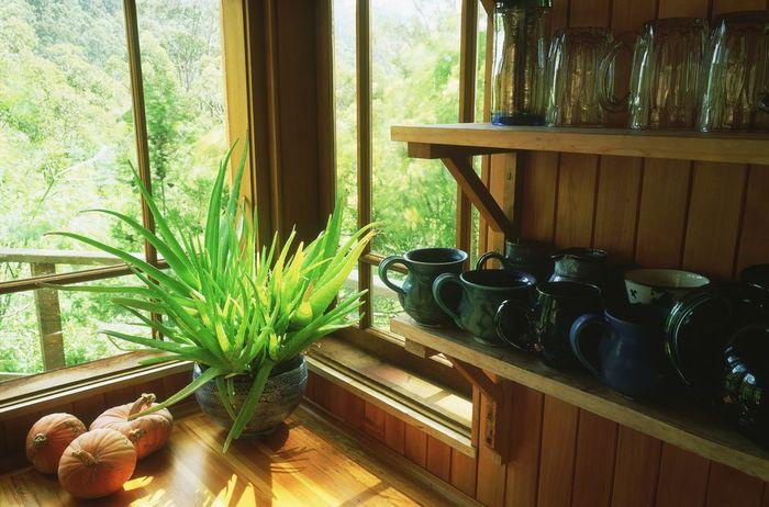 south-windows-best-plants-1.jpg