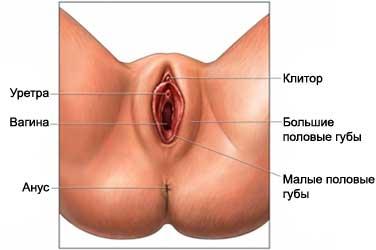 Клитор женская мастурбация